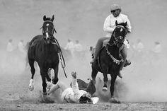 horses by Haitham AL Farsi