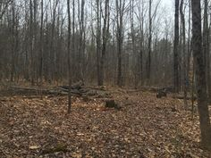 2.5 acre building lot in desirable location that is close to everything - schools, beaches, shopping, etc, yet nicely private. The lot is level and also has town sewer - a huge bonus!   11 Ridge Meredith NH 03253 MLS Number 4477119