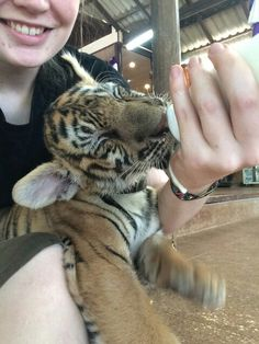 Feeding the kittens at Tiger Temple!