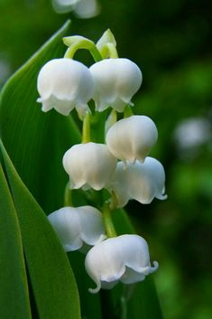fine 10 Best Fragrant Flowers to Scent Your Spring Garden Exotic Flowers, Amazing Flowers, White Flowers, Beautiful Flowers, Lilies Flowers, Unique Flowers, Tiny Flowers, Love Lily, White Gardens