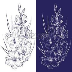 gladiolus: floral blooming gladiolus hand drawn vector illustration sketch