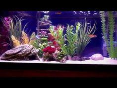 20 gallon freshwater aquarium - YouTube