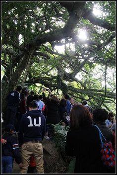 鸞山森林博物館  第一個是沿著臺九線在鹿野市區轉進鸞山大橋進到鸞山村。 第二個方式,如果時間充裕,也可以從台東大橋進入利吉村,沿197縣道往北走也可到達