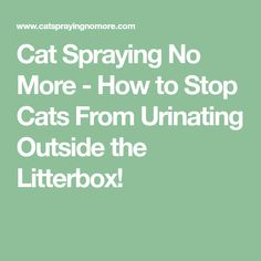 Learn more about cat spray remover stains cat spraying hair colors,cat pee laundry cleanses cat pee out of couch litter box,cat pee humor kittens cat pee hydrogen peroxide. Crazy Cat Lady, Crazy Cats, Cat Pee, Pet Life, Litter Box, Cats And Kittens, Rid, The Outsiders, How To Remove