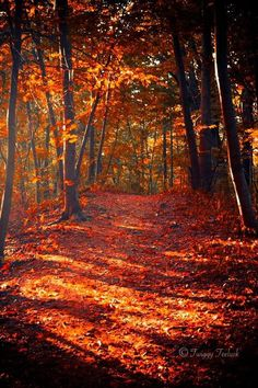 The Red, Orange, & Gold tones of Autumn with a strong mix of Black and Brown thrown in.