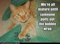 This is everyone in my office right now...bubble wrap is the best part of moving.