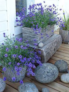 Garden Structures, Garden Paths, Garden Landscaping, Blue Garden, Dream Garden, Garden Design Images, Small Backyard Patio, Rustic Gardens, Container Flowers