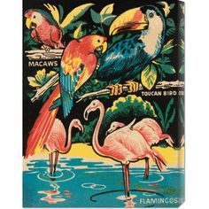 Global Gallery 'Tropical Hobbyland - Birds' by Retro Travel Stretched Canvas Art | Wayfair