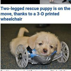 Something we liked from Instagram! @Regrann from @vox_silentii -  @Regrann from @4leglv: A two-legged shelter puppy is back on his feet thanks to scientists in Ohio.  Tumbles who was born without his front legs is now rolling around with help from a 3-D printed wheelchair created by the Ohio University Innovation Center. The pup was rescued at 2 weeks old and taken to Friends of the Shelter Dogs in Athens Ohio. Karen Pilcher serves as the organization's rescue coordinator and Tumble's foster…