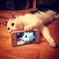 Los gatetes también se hacen selfies