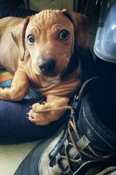 Puppy love! That look!