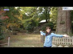 【動画】<糸島へ行こう!>雷山・雷神社で木々のパワーを感じよう