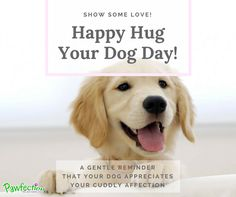 Dogs crave our affection and a single hug goes a long way to warming their heart, and rewarding their loyalty and love. Hug You, Loyalty, Dog Days, Your Dog, Love, Heart, Happy, Amor, Ser Feliz
