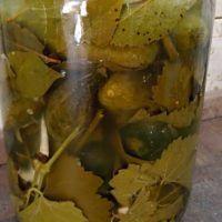Recept : Kvašené okurky | ReceptyOnLine.cz - kuchařka, recepty a inspirace Pickles, Cucumber, Food, Essen, Meals, Pickle, Yemek, Zucchini, Eten