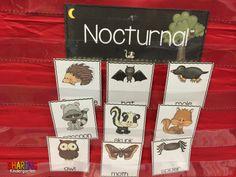 Nocturnal Animal Sorting