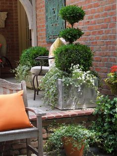 topiaried box, ivy and white trailing plant in a zinc planter