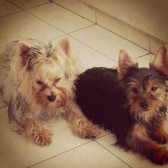 Perla y Chester se divierten y aprovechan el sol de Barranquilla.