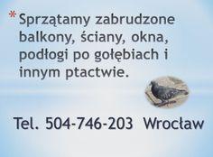 Wrocław, sprzątamy zabrudzone balkony, strychy,  ściany, okna, podłogi po gołębiach i innym ptactwie, tel504-746-203, usuwanie, czyszczenie, zanieczyszczonych przez ptasie odchody miejsc, pomieszczeń, zakamarków. wywóz starych rzeczy ze strychu, balkonu. Czyszczenie strychu, czyszczenie poddasza, balkonu. Opróżnienie strychu, wywiezienie rzeczy i posprzątanie po gołębiach i innych ptakach. Wrocław