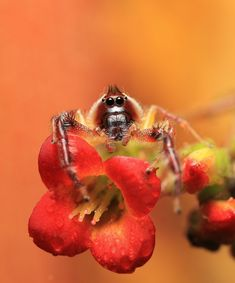 Northern Jumper. by merrittimages - Orange Is The Color Photo Contest