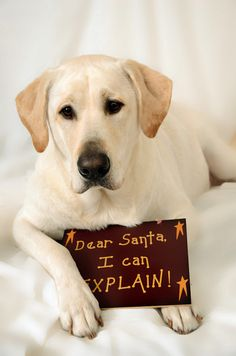 Dear Santa, I Can Explain! love this idea! #dog #photography #portrait