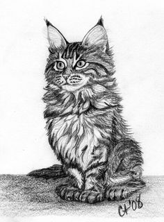 maine_coon_kitten_by_cyntht.jpg (753×1023)