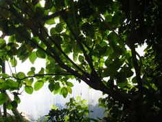 Eden Project - Cornwall residential Oct 2014