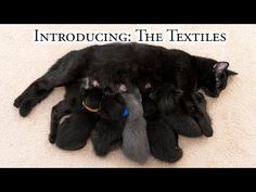 Introducing:  The Textiles! - YouTube