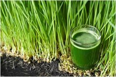 Wheatgrass can help you turn gray hair back to its original color.