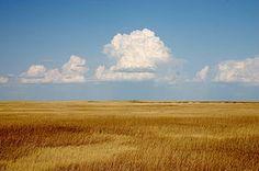 Prairie - Wikipedia, the free encyclopedia