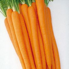 Visit us to learn more about our Sugarsnax Hybrid Carrot. High levels of beta carotene and a super-sweet flavor make this an ideal carrot to eat right from t. How To Plant Carrots, Sweet Carrot, Still Tasty, Loose Weight Fast, Carrot Seeds, Beta Carotene, Eat Right, Fruits And Vegetables, Veggies
