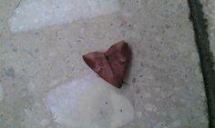 A beautiful moth...