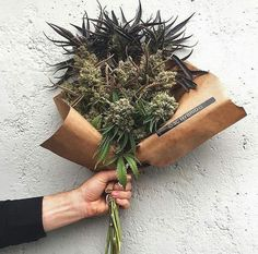 Pin on Cannabis Community Medical Marijuana, Rauch Fotografie, Weed Pictures, Stoner Art, Weed Art, Stoner Girl, Smoke Weed, Stoner Humor, Smoking Weed