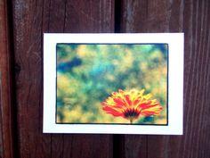 Gerbera Daisy Greeting Card. Blank Greeting Card. by chromeCHARM