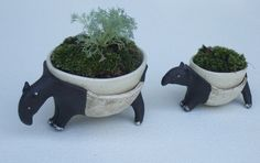 Malayan Tapir Pot for Moss Plant Pots, Potted Plants, Flower Pots, Flowers, Plant Growth, Gardening Tips, Planters, Environment, Home And Garden