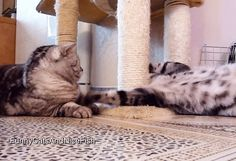 Wake up, bro ! Funny Cats .Full video