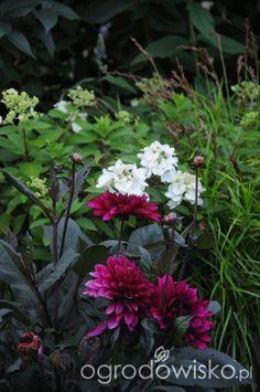 Jestem w polu - strona 660 - Forum ogrodnicze - Ogrodowisko