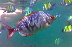 #Snorkeling with Colorful Fish in #Krabi #Thailand