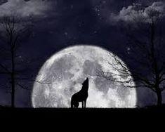 Kuvahaun tulos haulle wolf wallpaper full hd