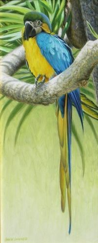 Blue and Yellow Macaw 16x7, painting by artist George Lockwood