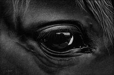 Lori Dunn-scratchboard-The-Fields-Beyond