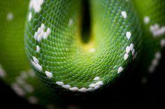 macro of snake skin