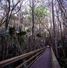 View of man-made nature trail at the Highlands Hammock State Park in Sebring, Florida.