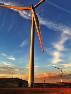 Windfarm. Scotland Wind Farms, Wind Power, Windmills, Choppers, Eagles, Wind Turbine, Scotland, Bird, Wind Mills