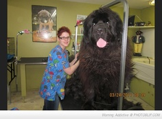 :D  one day I will have a house big enough to own a Neopolitan Mastiff.....my dream dog