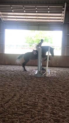 Hunter jumper Chica and I jumping - Art Of Equitation Cute Horses, Pretty Horses, Horse Love, Beautiful Horses, Horses Jumping Videos, Horse Videos, Andalusian Horse, Friesian Horse, Arabian Horses
