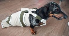 Our paralyzed wiener dog's recycled drag bag . Free tutorial with pictures on how to make a dog outfit in under 30 minutes by sewing with shirt. How To posted by Recycled Miracles. in the Other section Difficulty: Simple. Diy Dog Wheelchair, Dog Bike Basket, Paralyzed Dog, Biking With Dog, Happy End, Pet Health, Dog Grooming, Animal Rescue, Rescue Dogs