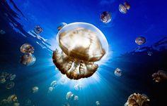 Les 25meilleures photos deNational Geographic