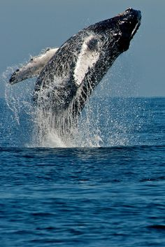 whale watching a must..I've done it in California but not on the east coast.