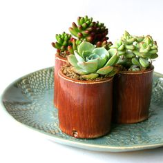 Succulent Pot Handmade Stoneware Planter Wood by BackBayPottery