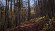 ne of the more enjoyable trails I have hiked recently in the Smokies, Old Sugarlands follows West Prong of Little Pigeon River for a mile and a half, then turns to the east and ascends the western …